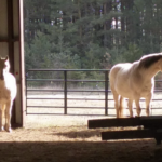 What a Horse Named Lightening Taught Me – Equine Therapy and its Unconventional Uses